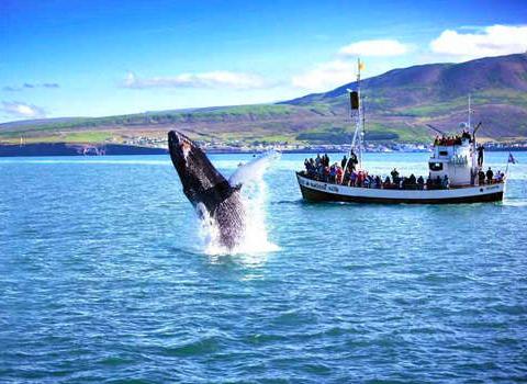 冰岛旅游费用